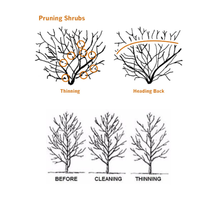 When Is The Best Time To Prune Trees Shrubs Hedges Arbortech