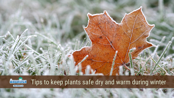 tips on how to keep plants and shrubs saved during the winter