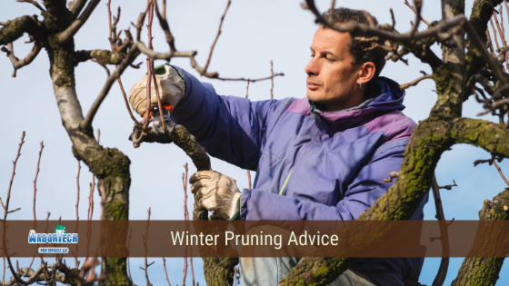 Winter pruning advice
