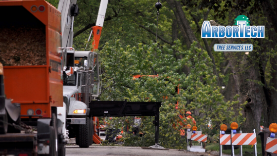 Arbortech tree services, fully licensed and insured