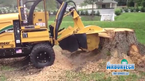 Stump grinding by Arbortech tree services